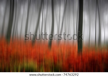 beautiful light in a autumn and beautiful forest, (up down camera movment) - stock photo