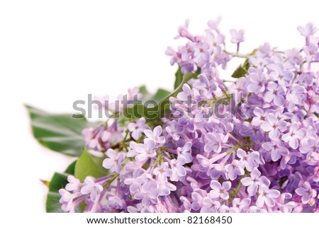 Beautiful lilac branch on a white background - stock photo