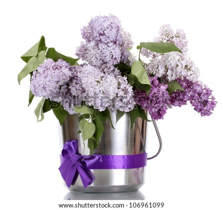 beautiful lilac flowers in metal bucket isolated on white - stock photo
