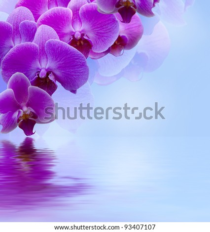Beautiful lilac orchid flower phalaenopsis reflected in water with copyspace - stock photo