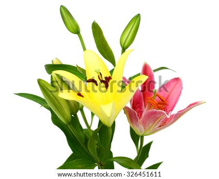 beautiful lily bouquet isolated on white background