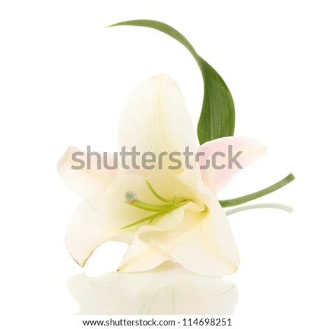 beautiful lily flower isolated on white