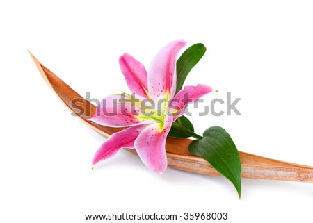 Beautiful lily flower set on a dried coco leaf, isolated over white - stock photo