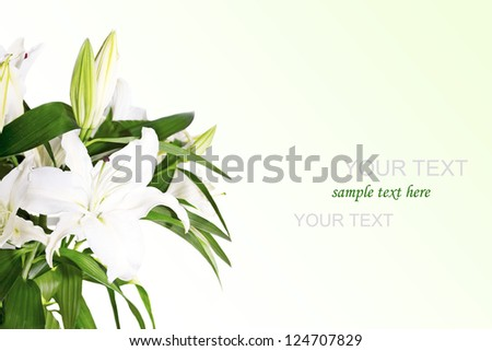 Beautiful Lily Flowers Border