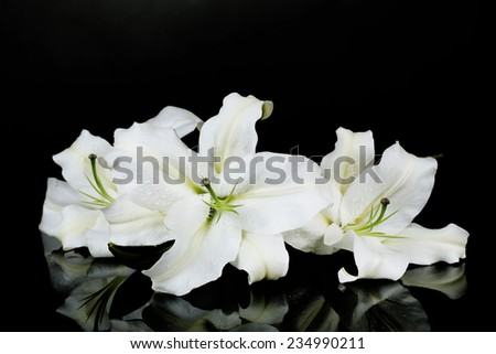 Beautiful lily isolated on black - stock photo