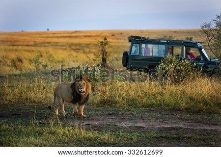 Beautiful lion with a safari car in the background in Kenya, Africa - stock photo
