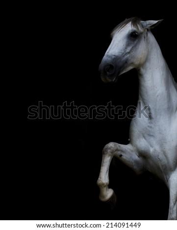 beautiful lipizzaner horse spanish steps - stock photo