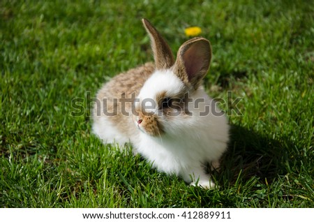 Beautiful little bunny on the lawn - stock photo