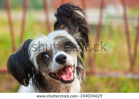 beautiful little dog - stock photo