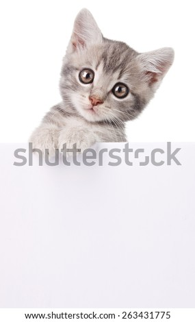 beautiful little emotional gray kitten with white board - stock photo