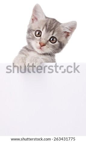 beautiful little emotional gray kitten with white board - stock photo
