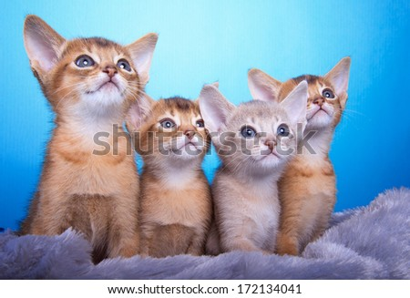 Beautiful little kittens. Animal portrait. Stilish photo of cat. Blue background. Colorful decorations. Collection of funny animals - stock photo