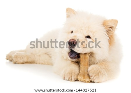 Beautiful little puppy chow chow - stock photo