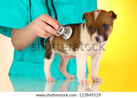 Beautiful little puppy on inspection by veterinarian on yellow background
