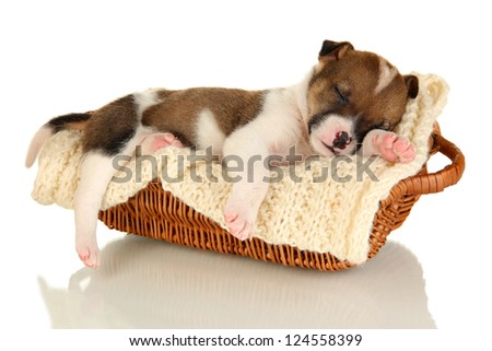 Beautiful little puppy sleeping in basket isolated on white - stock photo