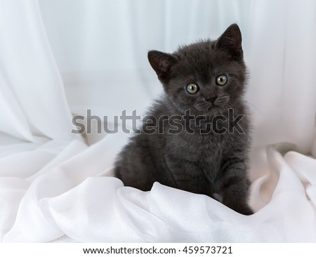 Beautiful little tabby kitten on a window sill. British Shorthair breed. - stock photo