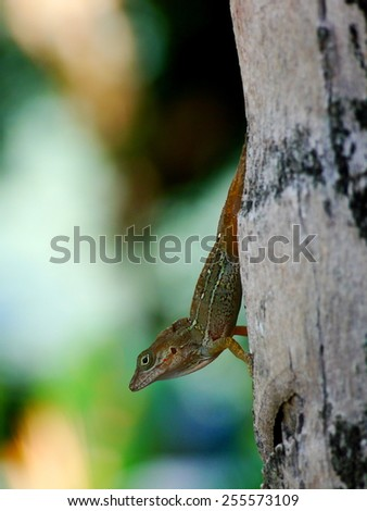Beautiful lizard sitting on a tree with a colorful background
