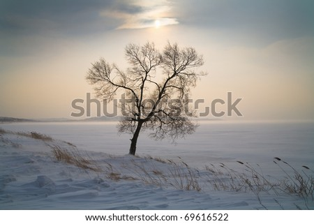 Beautiful lonely tree in winter. Snowy landscape - stock photo
