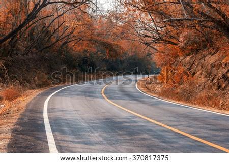 Beautiful long way road along into forest at autumn season - stock photo