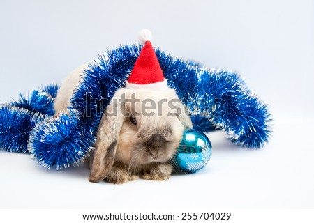 Beautiful lop-eared rabbit in Santa Claus hat with Christmas decorations - stock photo