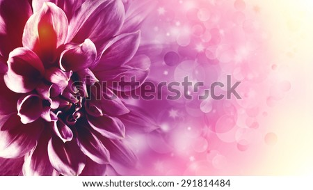 Beautiful lotus flower abstract floral backgrounds stock photo beautiful lotus flower abstract floral backgrounds with beauty bokeh mightylinksfo