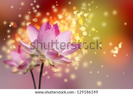 Beautiful lotus flower colorful background - stock photo