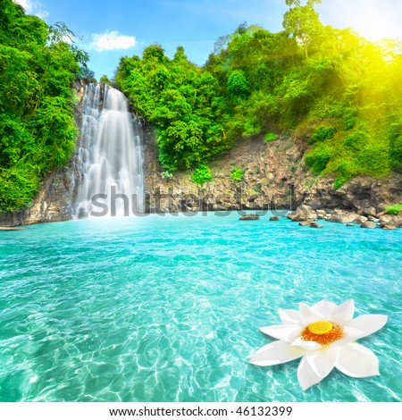 Beautiful lotus flower in waterfall pool. Vietnam - stock photo