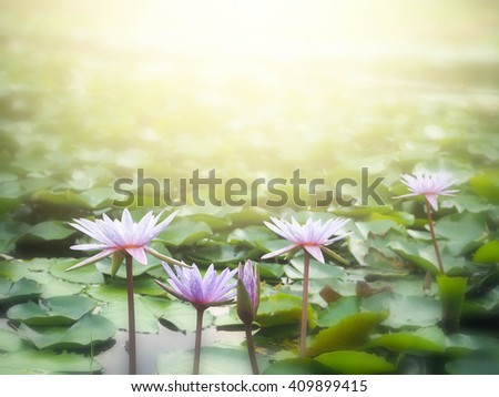beautiful lotus flower with sunlight in blur style for background - stock photo