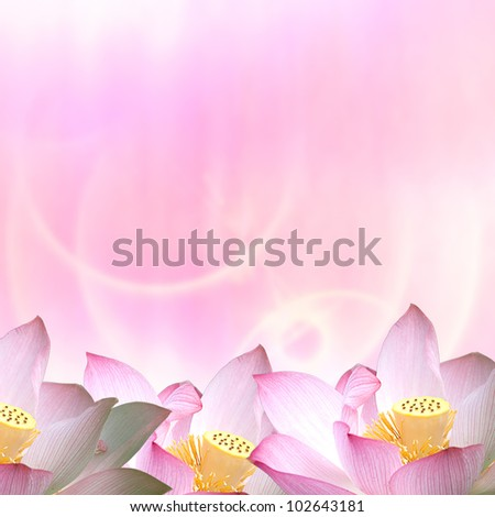Beautiful Lotus for adv or others purpose use - stock photo