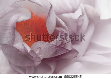 Beautiful lotus in soft style for background