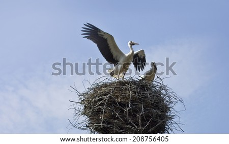 beautiful love storks on blue sky background