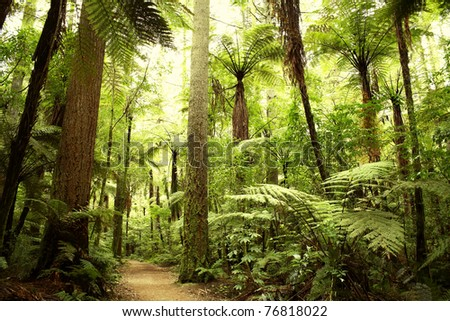 Beautiful lush forest - stock photo