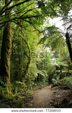 Beautiful lush forest