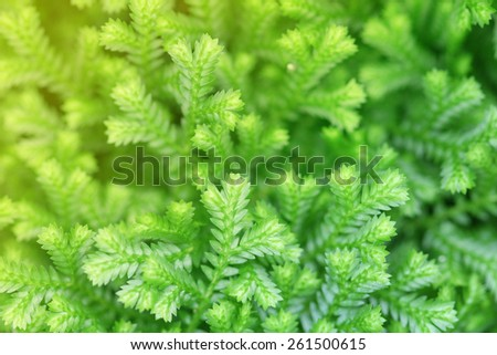 beautiful lush green leaf, Small nature - stock photo