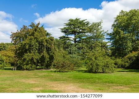 Beautiful Lush Green Woodland Garden in Sunshine - stock photo
