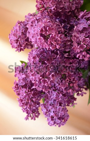 Beautiful luxury flavor Lamiales tree twig with vivid amethyst indigo color heads raceme. View close-up with space for text on light pink beige backdrop. Gift for loved women in Mother's Day - stock photo