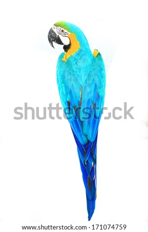 beautiful macaw - stock photo