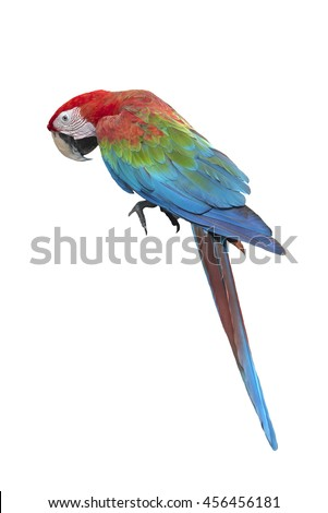 Beautiful macaw , Bird green wing macaw isolated on white background