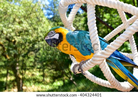 Beautiful Macaw playing in an aviary. Parrot.