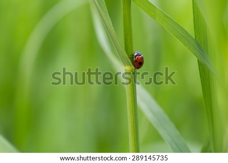 Beautiful macro shoot of ladybug sitting on grass leaf. - stock photo
