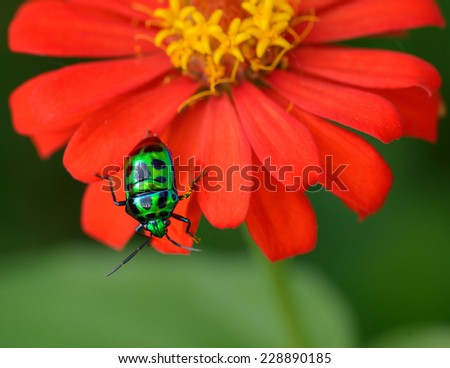 beautiful macro the colored bug sits on a red flower - stock photo