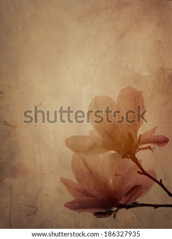 Beautiful magnolia flower on textured background - stock photo