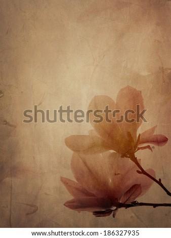 Beautiful magnolia flower on textured background - stock photo