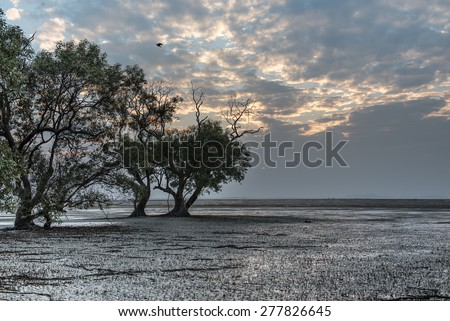 Beautiful mangroves forest on shoreline at low tide of Andaman sea, Thailand - stock photo