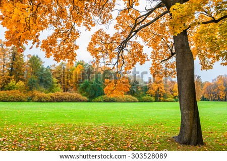 Beautiful maple with yellow leaves in the park. Autumn landscape, fall scene.