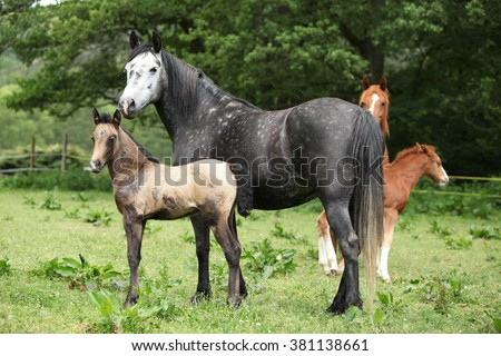 Beautiful mare with its foal standing together on pasturage - stock photo