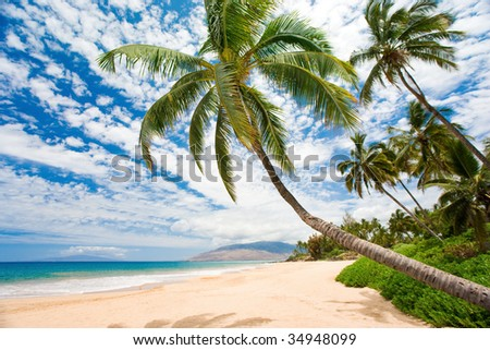 beautiful maui beach on bright sunny afternoon with palm trees - stock photo