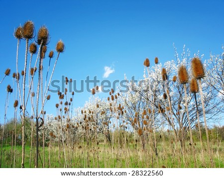 Beautiful meadow - stock photo