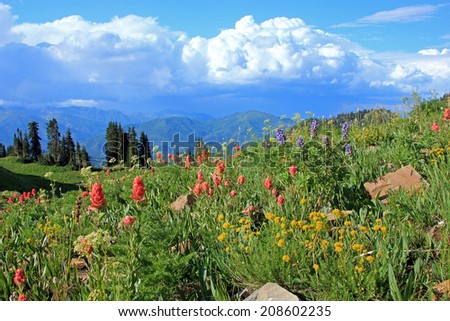 Beautiful meadow filled with colorful wildflowers in the Wasatch Mountains, Utah, USA. - stock photo