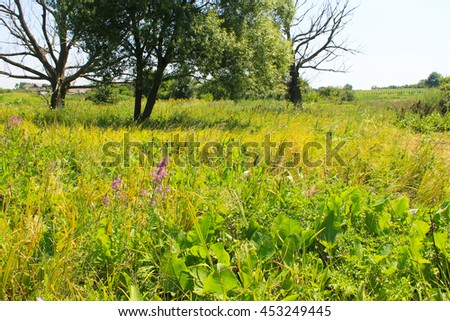 Beautiful meadow on summer - stock photo